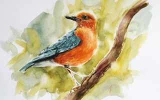 архивы птицы акварелью
