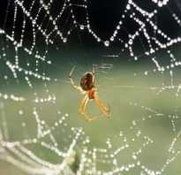 Примета: паук в доме