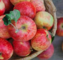 Как делать яблочный сок в домашних условиях