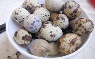 Перепелиные яйца на пасху