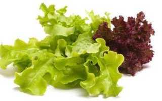 Виды салатных листьев. Листовые салаты. Использование в кулинарии