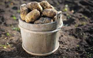 К чему снится копать картошку с умершим