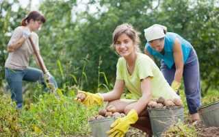 К чему снится копать картошку на огороде