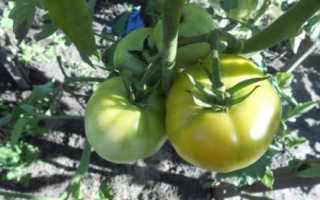 Заготовки из зеленых помидоров на зиму рецепты