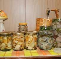 Засолка отварных грибов на зиму