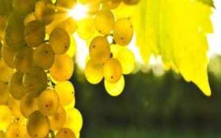 Как выжимать сок из винограда