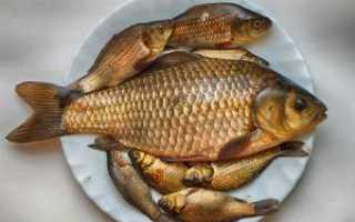 Как правильно жарить рыбу карась