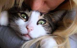 Почему нельзя целовать кошек в морду