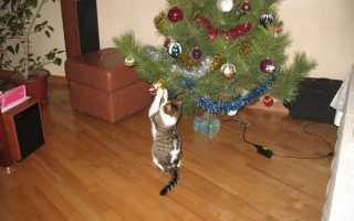 Как сохранить живую новогоднюю елку подольше