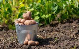 Как правильно выкапывать картошку