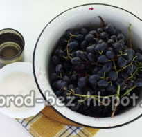 Как выжать виноградный сок без соковыжималки