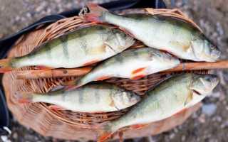 Засолка мелкой речной рыбы в домашних условиях