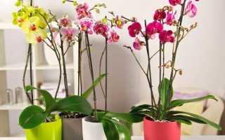 Как надо ухаживать за орхидеей